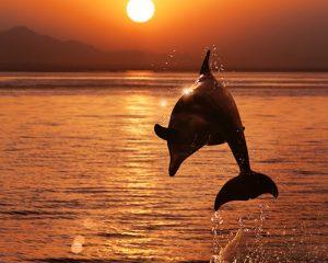 """Die Sonne symbolisiert unseren persönlichen """"Schwung"""" im Leben"""
