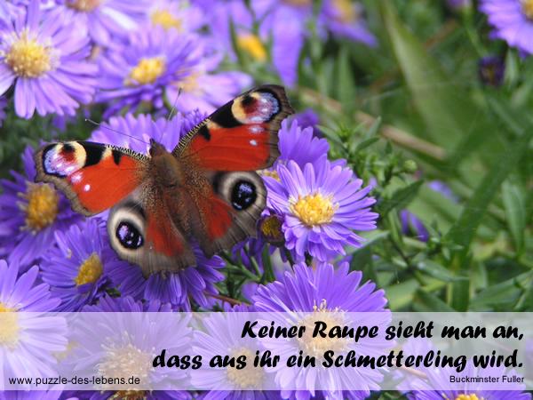 Keiner Raupe sieht man an, dass aus ihr ein Schmetterling wird.