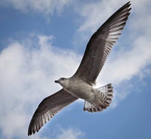 Der Flug eines Vogels bedeutet völlige Freiheit