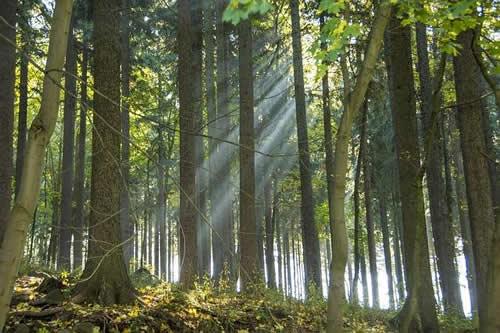 In einem Wald gibt es viel wovon man sich ernähren kann.