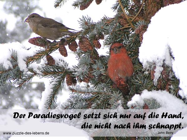Der Paradiesvogel setzt sich nur auf die Hand, die nicht nach ihm schnappt.