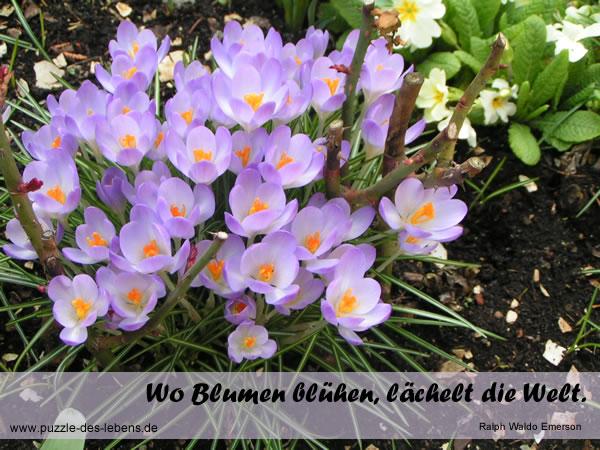 Wo Blumen blühen, lächelt die Welt.